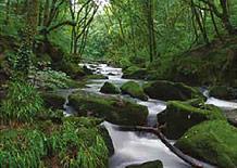 Colin Glen Biodiversity