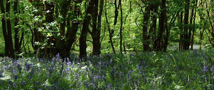 Woodland & Hedges